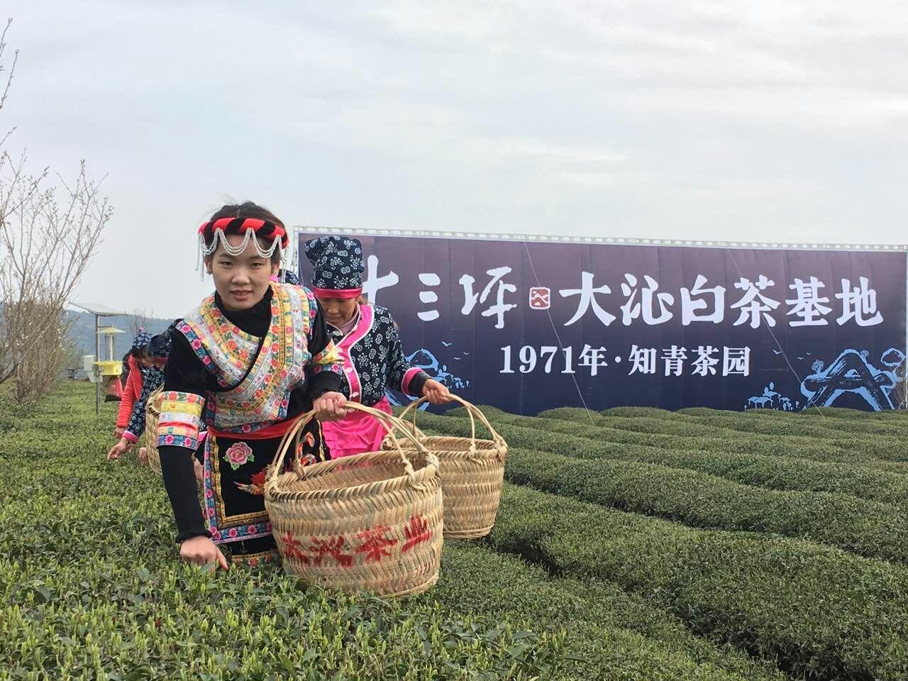 【直播】《感受白茶 共享健康》论坛