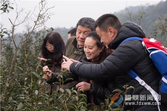 导演林小龙(左二)制片人杨建(右一)在观赏野山茶的新嫩芽.jpg