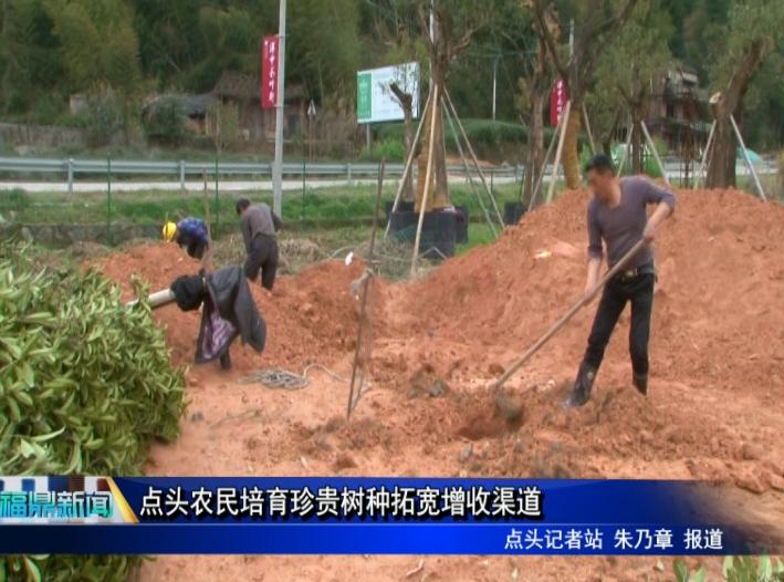 点头农民培育珍贵树种拓宽增收渠道