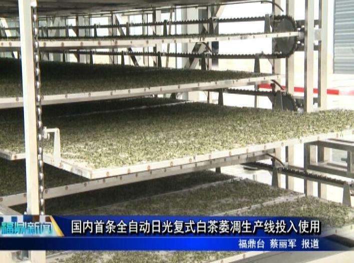 国内首条全自动日光复式白茶萎凋生产线投入使用