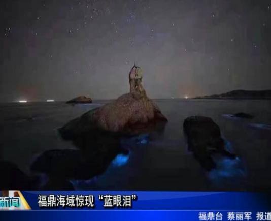 """福鼎海域惊现""""蓝眼泪"""""""