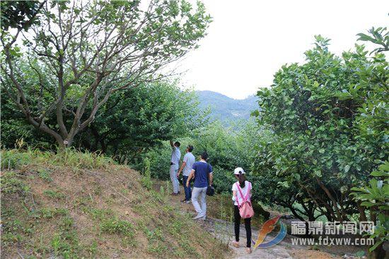 丰岳山庄欲打造四季水果乐园