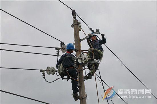 福鼎电网工人迅速抢修受损线路
