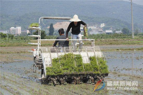 农民乐道种粮省力又增收 新农技+机械化+好政策