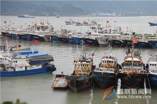 渔船陆续进入点头岐头海湾一带避风