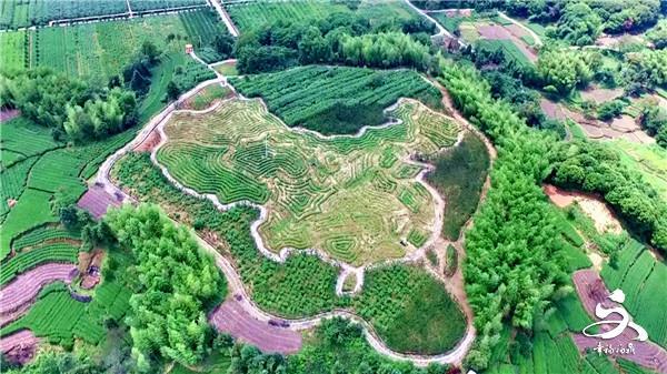 中国地图图案茶园惊现茶乡点头