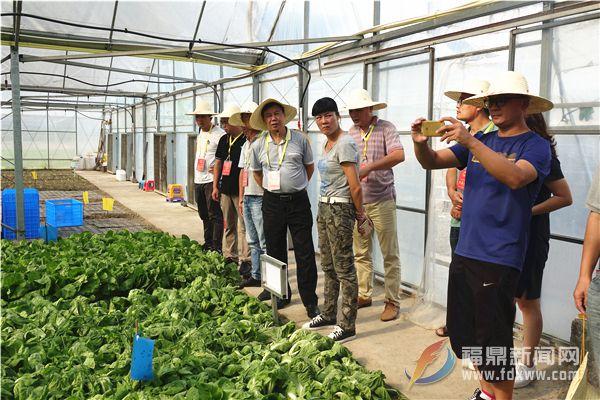 市人大常委会到店下镇开展现代农业 发展情况调研