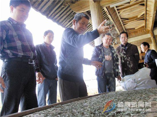 福鼎文化遗产的海丝印记之十八——白茶手工