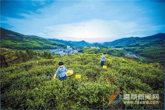 叠石:优化生态促发展 边界和谐守平安