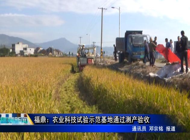 福鼎:农业科技试验示范基地通过测产验收