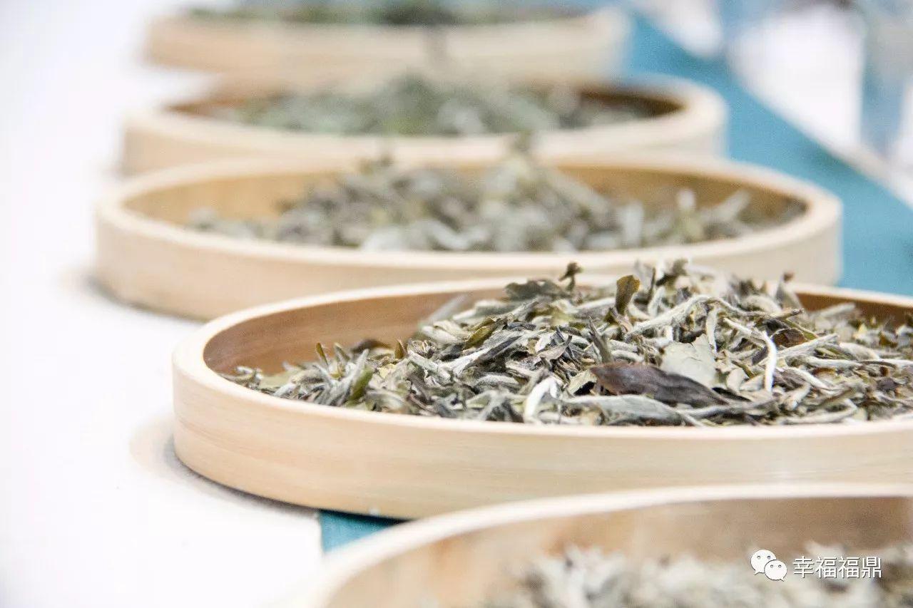 直击广州茶博会!福鼎白茶风头正盛!
