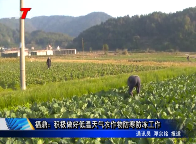 福鼎:积极做好低温天气农作物防寒防冻工作