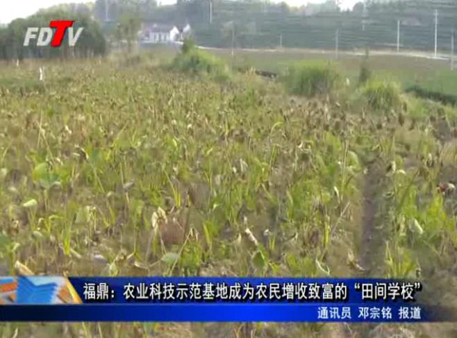 """福鼎:农业科技示范基地成为农民增收致富的""""田间学校"""""""