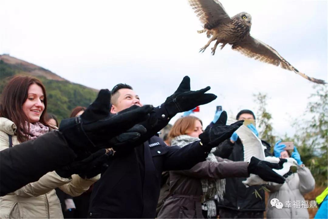 福鼎这十二只国家二级保护动物重归大自然