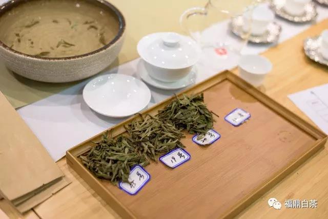 福鼎白茶,你真的会喝吗?