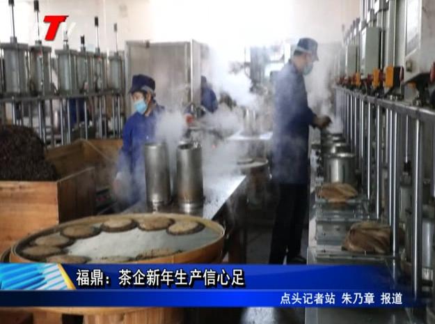 福鼎:茶企新年生产信心足