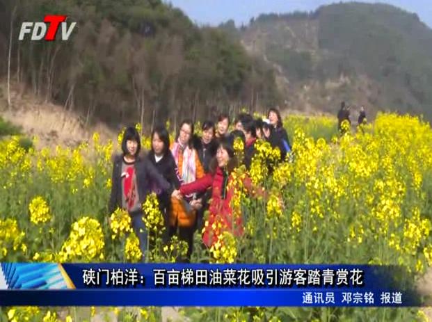 硖门柏洋:百亩梯田油菜花吸引游客踏青赏花