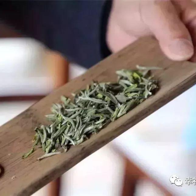 白茶与糖代谢疾病国际高峰论坛将在福鼎举办!
