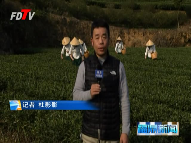 福鼎:生态茶园 绿色发展