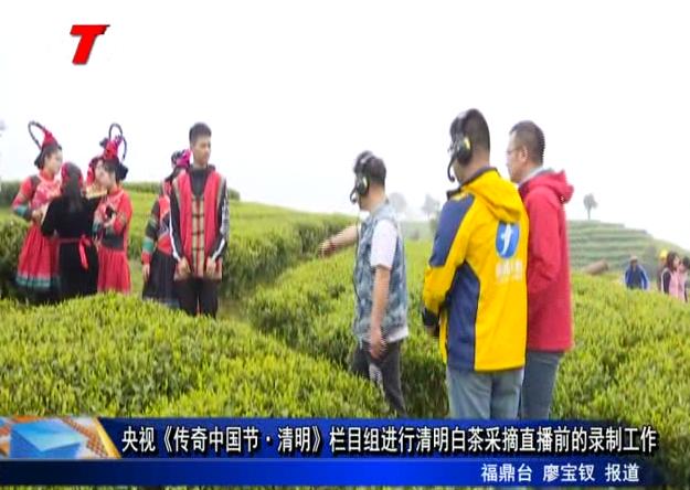 央视《传奇中国节·清明》栏目组进行清明白茶采摘直播前的录制工作
