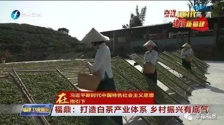 """如何探索一条乡村振兴新""""茶""""路,福鼎有话说!"""