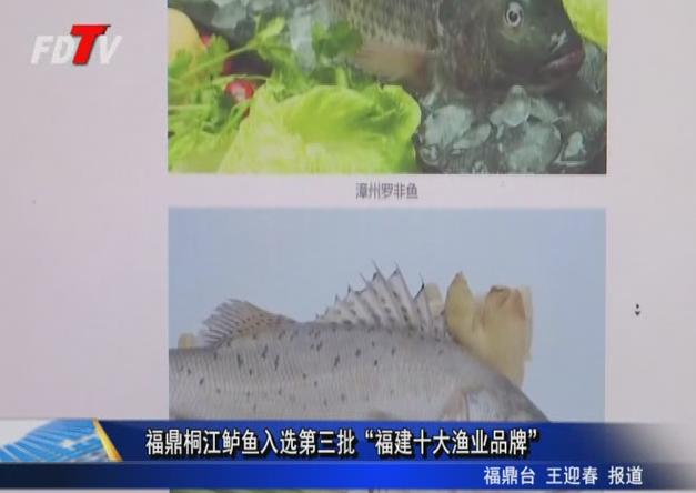 """福鼎桐江鲈鱼入选第三批""""福建十大渔业品牌"""""""