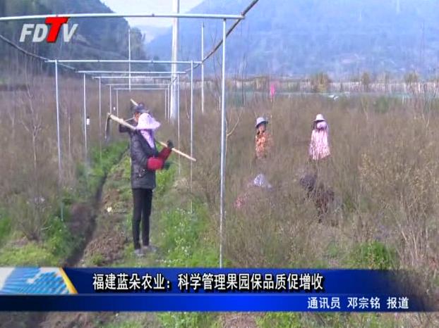 福建蓝朵农业:科学管理果园保品质促增收