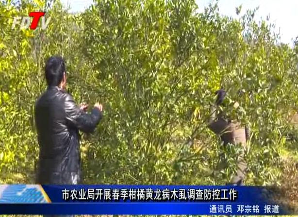 市农业局开展春季柑橘黄龙病木虱调查防控工作