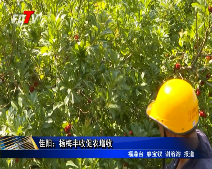 佳阳:杨梅丰收促农增收
