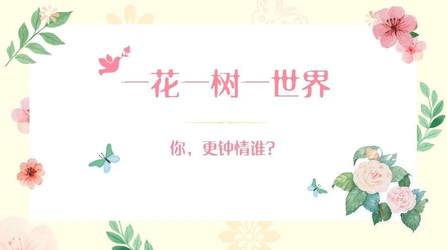 """福鼎将票选""""市树、市花""""啦!一花一树一世界,你更钟情谁?"""