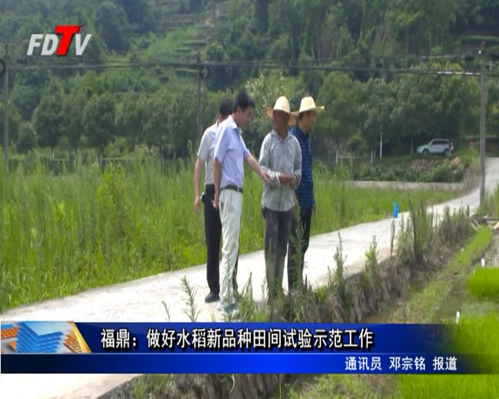 福鼎:做好水稻新品种田间试验示范工作