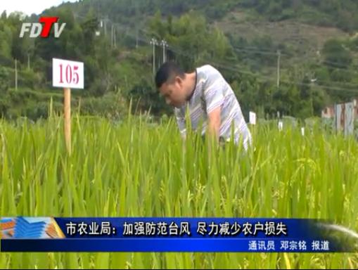 市农业局:加强防范台风 尽力减少农户损失