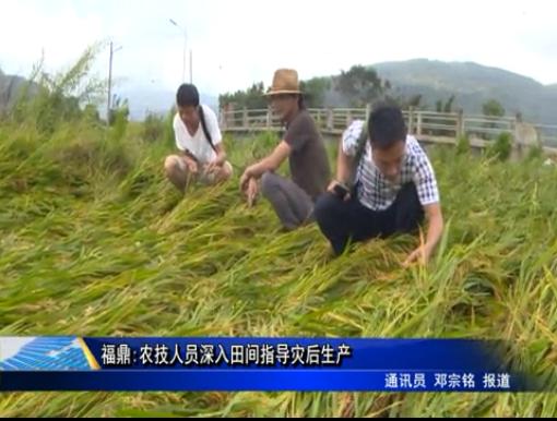 福鼎:农技人员深入田间指导灾后生产