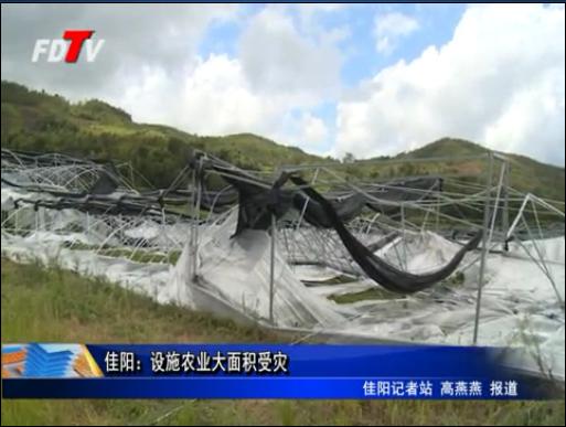 佳阳:设施农业大面积受灾