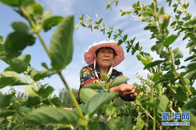 职业农民和科研人员增收细则有望加速出台