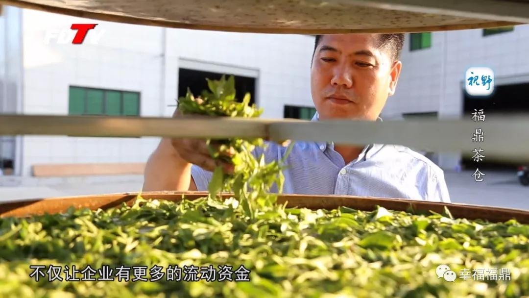 储存+贷款+销售,全国首个大型福鼎白茶仓储陈化基地助推白茶发展新模式