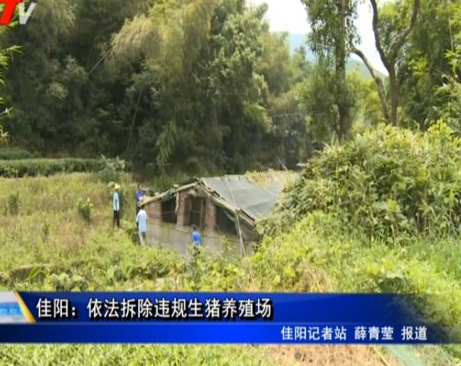 佳阳:依法撤除违规生猪养殖场