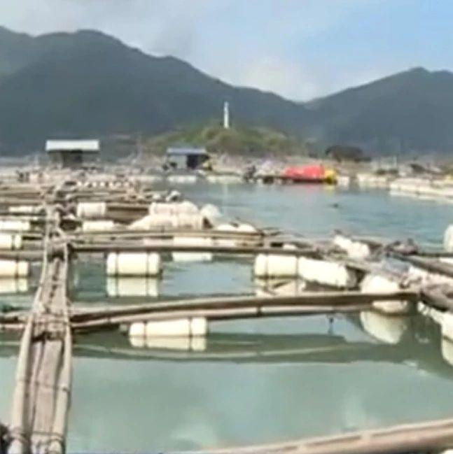废旧渔排专项清理行动进行中,福鼎佳阳乡拆除400口废旧渔排