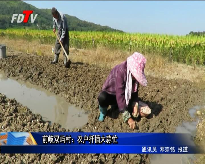前岐双屿村:农户扦插大蒜忙