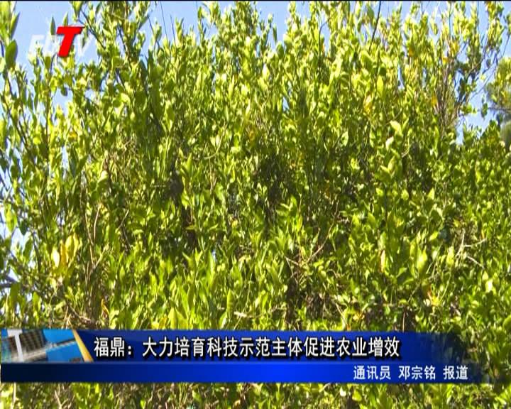 福鼎:鼎力大举培养科技树模主体促进农业增效