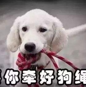 福鼎一市民遛狗未拴绳,致宠物狗扑倒女童!你怎样看?
