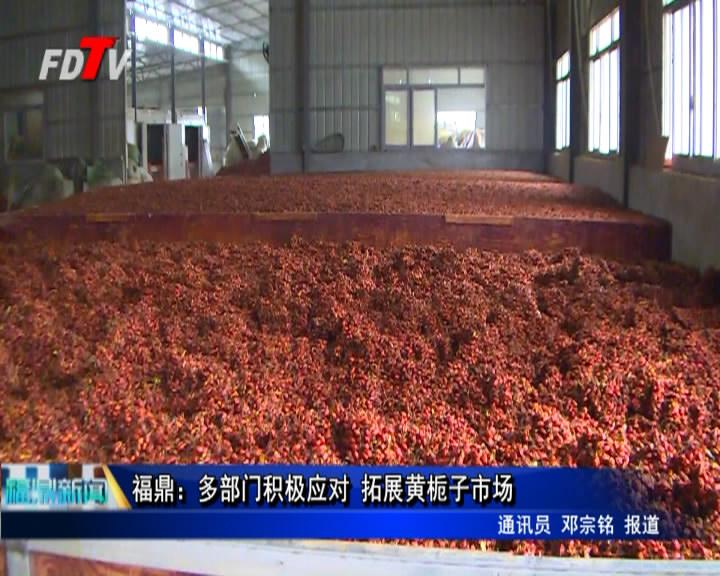 福鼎:多部门积极应对 拓展黄栀子市场