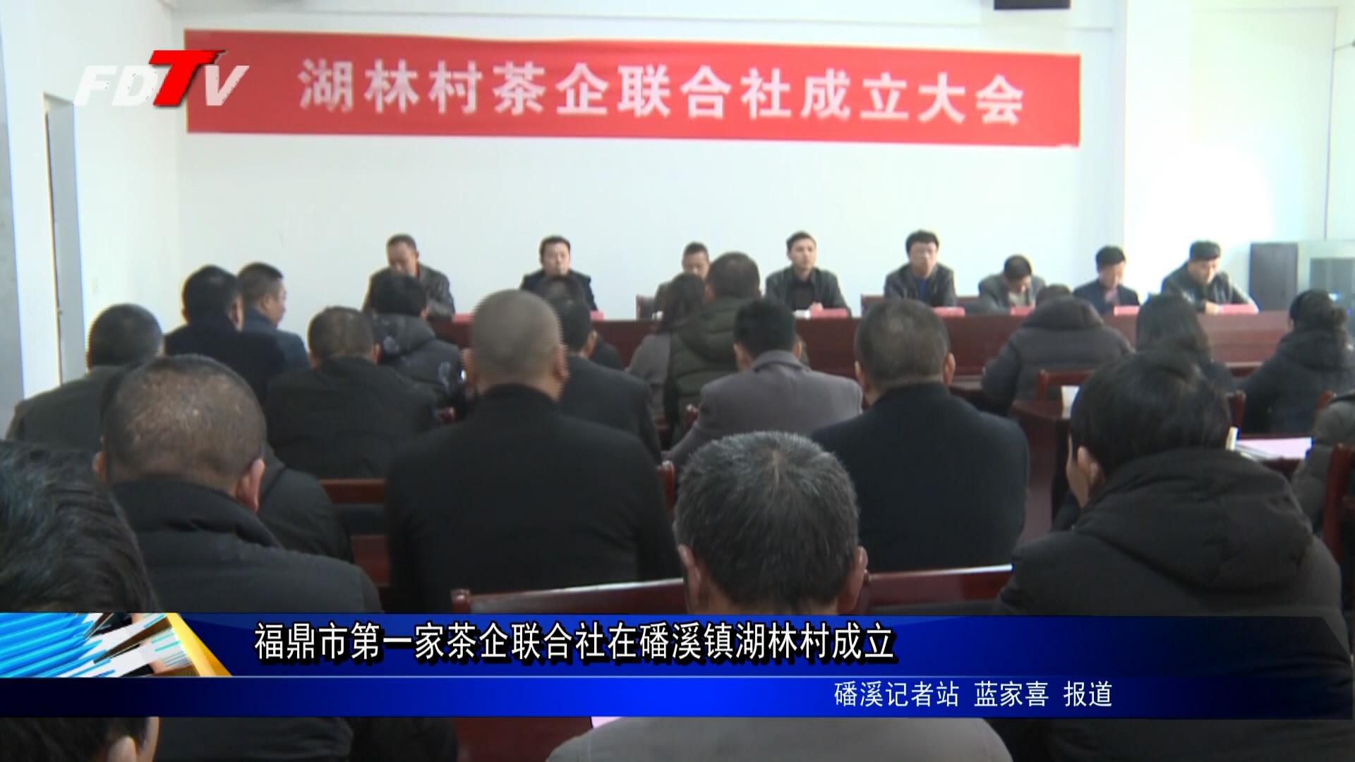 福鼎市第一家茶企团结社在磻溪镇湖林村建立
