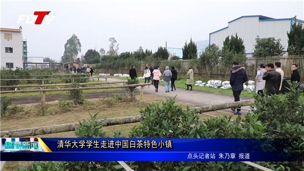 清华大学学生走进中国白茶特色小镇