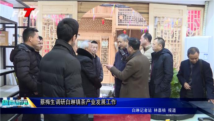 蔡梅生调研白琳镇茶产业发展工作