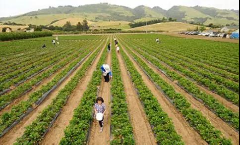 宁德拟推荐这些农场为省级家庭农场示范场,有你家乡吗?