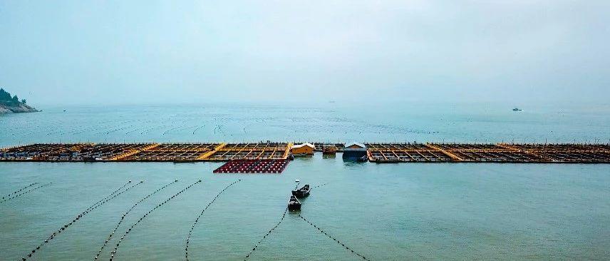 福鼎5月1日起进入伏季休渔期,这些行为是严厉禁止的!