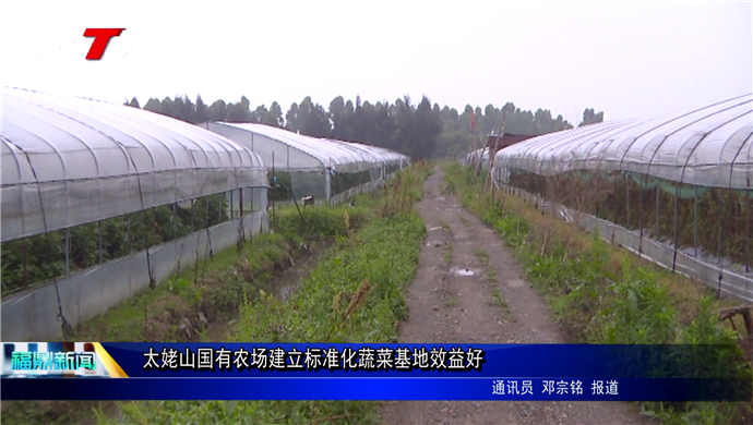 太姥山国有农场建立标准化蔬菜基地效益好