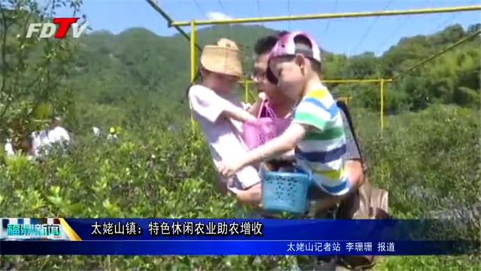 太姥山镇:特色休闲农业助农增收