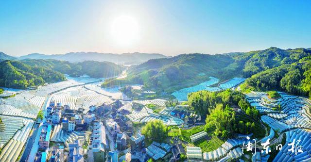 福安松罗山乡满洋村 葡萄栽培大棚连绵成片蔚为壮观